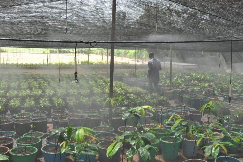 Allanblackia-Ghana-Agroforestry-nursery-sprinkler-e1457344053477 (1)