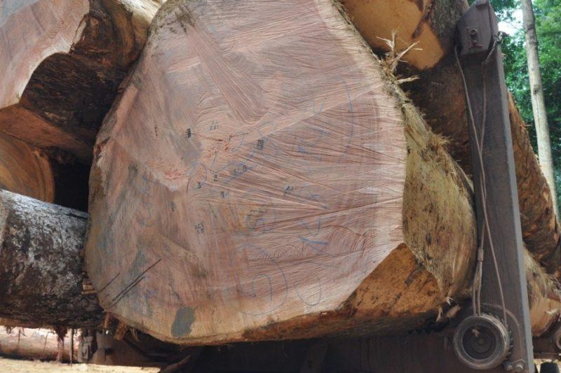 Truck-load-of-Sapelli-logs-Ghana-1-e1457339350219