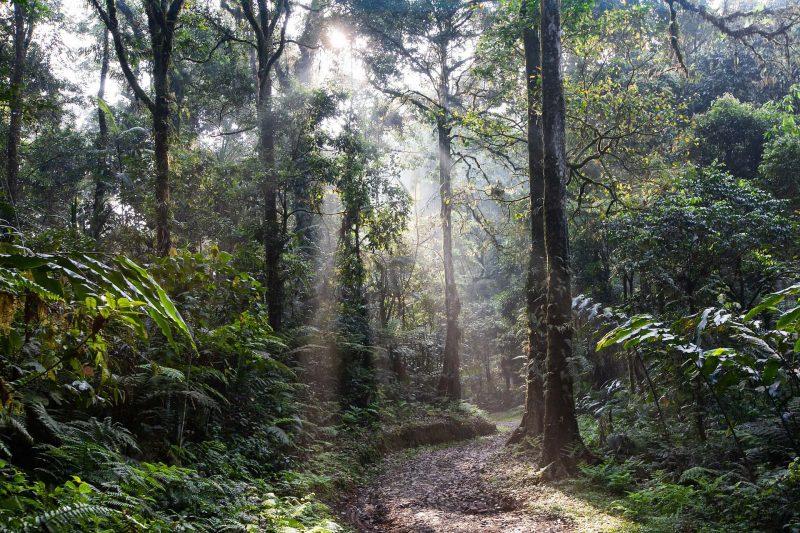 the-aceh-restoration-project-rainforest